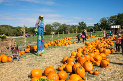 fall things to do in dallas